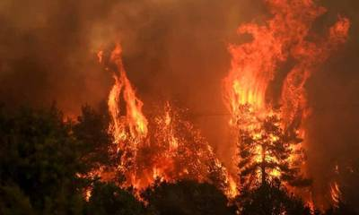 Greenpeace Ελλάδας: Μύθοι και αλήθειες για τις πυρκαγιές του φετινού Αυγούστου!
