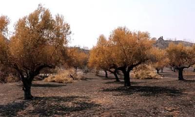 ΣΥΡΙΖΑ – Π.Σ.: «Τι να κάνουμε» για την Πρωτογενή Παραγωγή ύστερα από τις πυρκαγιές