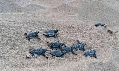 Αρχέλων: Τικάνεις αν βρεις χελωνάκια στην παραλία, ξέρεις;
