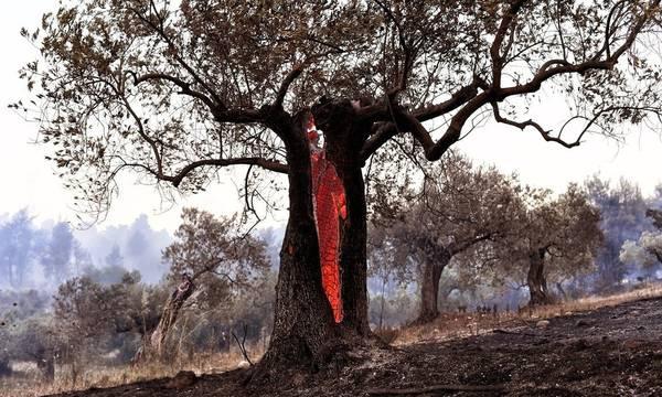 ΕΛΓΑ: Ηλεκτρονική δήλωση των ζημιών από τις πυρκαγιές στο arogi.gov.gr, από 18/8