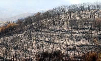 ΚΚΕ: Ο δήμος Αν. Μάνης «πετάει την μπάλα στην εξέδρα» για τις πυρκαγιές!