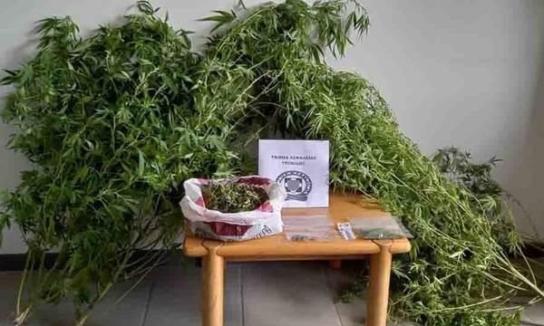 Συλλήψεις για ναρκωτικά σε Αργολίδα και Αρκαδία