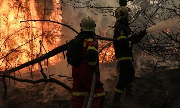 Φθιώτιδα: Έβαζα φωτιές γιατί μου άρεσε να βλέπω φλόγες και καπνό, λέει ο 14χρονος εμπρηστής
