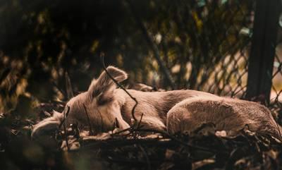 21 Αυγούστου: Διεθνής Ημέρα Αδέσποτων Ζώων