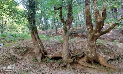 Ευκλής Καλαμάτας: Πεζοπορούν στο ρέμα Μουτσούρη, για να καλωσορίσουν το Φθινόπωρο