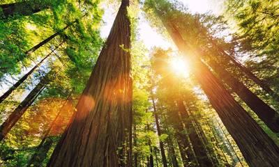 Το 30% των ειδών δέντρων του πλανήτη κινδυνεύουν με εξαφάνιση