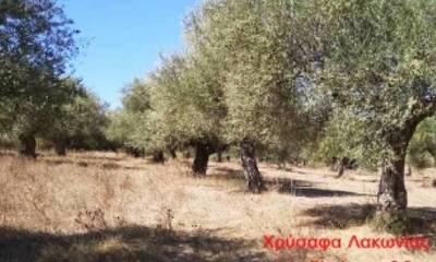 Πωλείται κτήμα 9,3 στρέμματα στα Χρύσαφα Λακωνίας