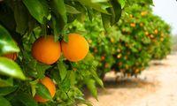 Αφαίρεση βιολογικού σήματος από παραγωγό πορτοκαλιών στη Λακωνία!