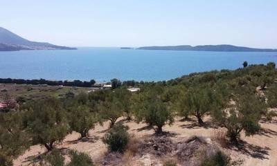 Πωλείται οικόπεδο 10.150τ.μ. με πανοραμική θέα στη Γιάλοβα Μεσσηνίας