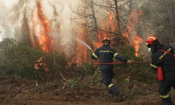Φωτιά στη Λιαντίνα του δήμου Σπάρτης