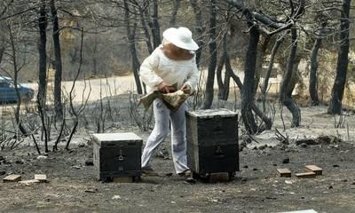 Σε τηλεδιάσκεψη με μελισσοκόμους της πυρόπληκτης Μάνης και Εύβοιας