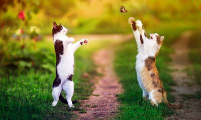 4 Οκτωβρίου: Παγκόσμια Ημέρα των Ζώων