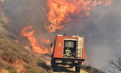 Αμαλιάδα: Φωτιά σε δασική έκταση στην περιοχή Αστεραίικα
