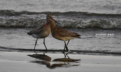 Παγκόσμια Ημέρα Αποδημητικών Πτηνών - Η γιορτή των πουλιών (photos)