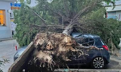Κακοκαιρία «Αθηνά»: Πτώσεις δέντρων στην Αργολίδα (photos)