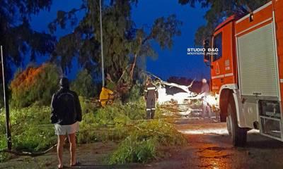 Κακοκαιρία «Αθηνά»: Πτώσεις δέντρων από τον ισχυρό άνεμο στην Πελοπόννησο (photos)