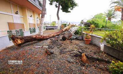 Κακοκαιρία «Αθηνά»: Δυο μεγάλα δέντρα προκάλεσαν σοβαρές ζημιές σε ξενοδοχείο στη Νεα Κίο (photos)