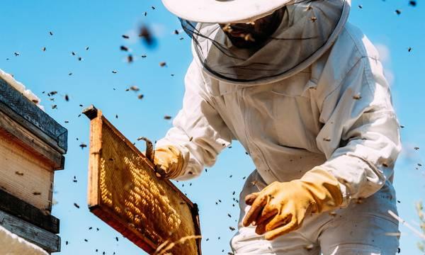 Αίτηση - δήλωση κατεχόμενων κυψελών από όλους τους μελισσοκόμους έως τις 20 Οκτωβρίου