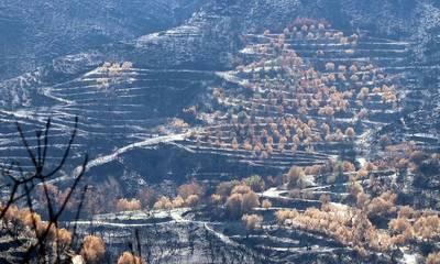 Διεθνής Ημέρα Μείωσης των Φυσικών Καταστροφών – Κραυγή από τα καμένα της Πελοποννήσου!