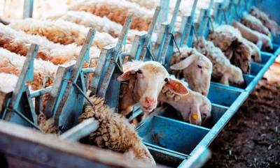 Δωρεάν διανομή ζωοτροφών στους πυρόπληκτους κτηνοτρόφους της Ανατολικής Μάνης