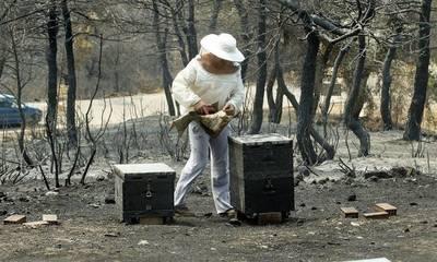 Έτσι θα στηριχτεί η μελισσοκομία ύστερα από τις πυρκαγιές του καλοκαιριού