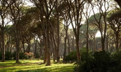 Δάσος Στροφυλιάς: Μια από τις πιο ξεχωριστές γωνιές της Πελοποννήσου